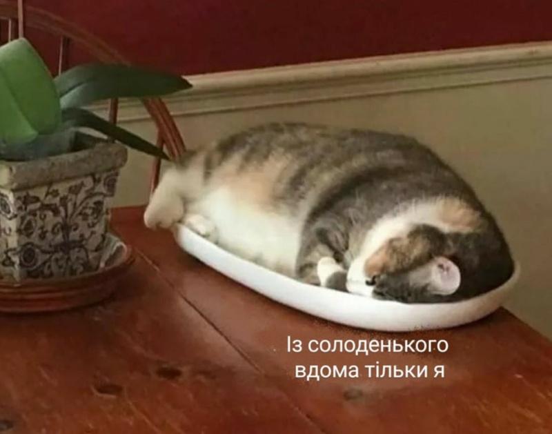 Коте A_112_12