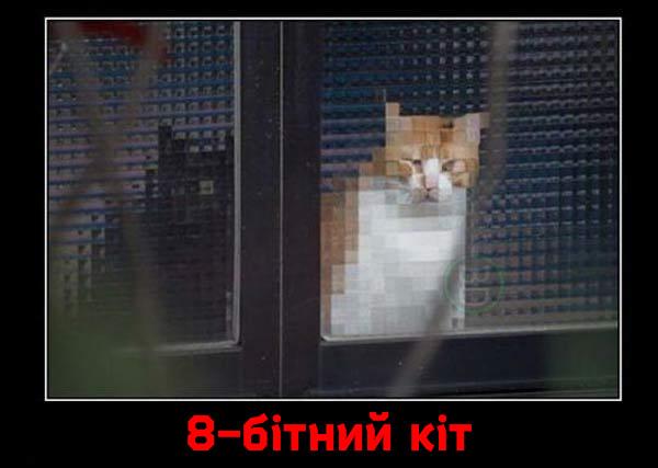 Коте A_112_13