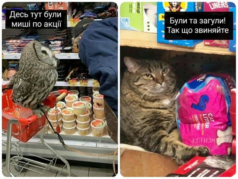 Коте A_112_15