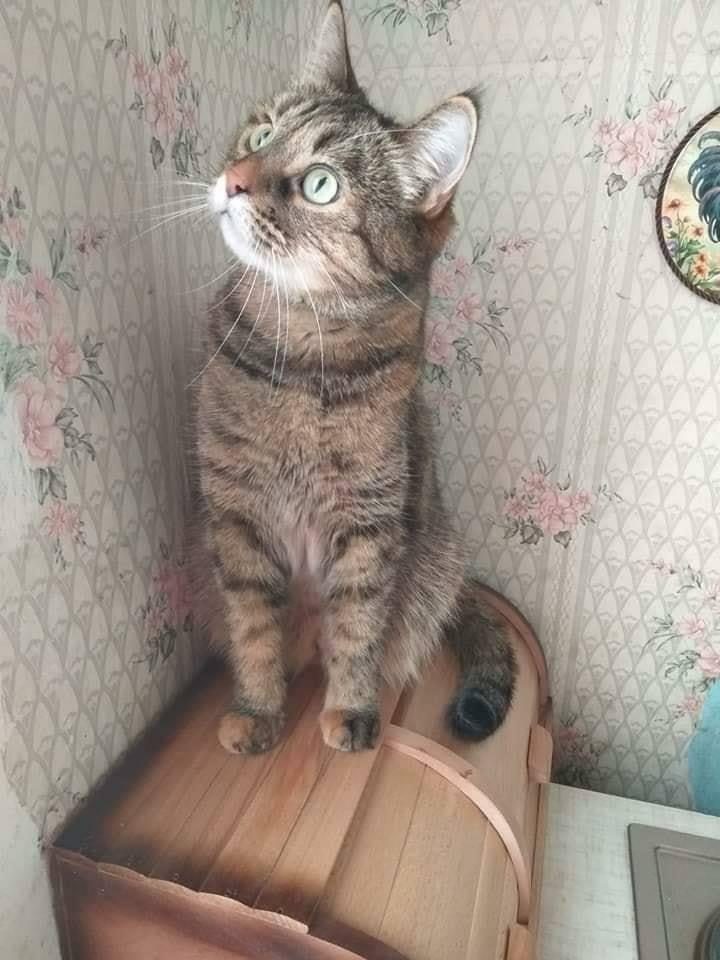 Коте A_11310