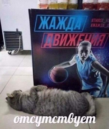 Коте A_113_10