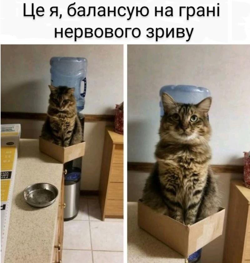 Коте A_113_11