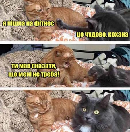 Коте A_11610