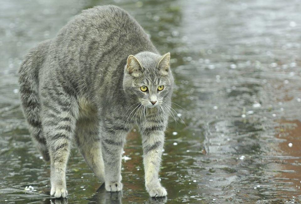 Коте A_11710