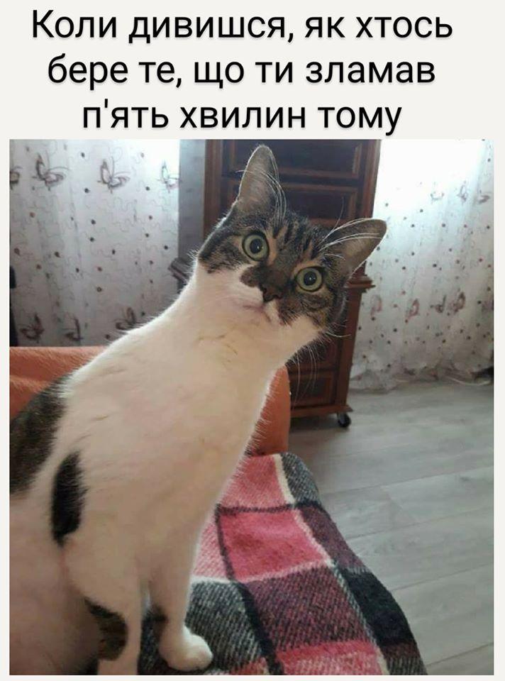 Коте A_117_10