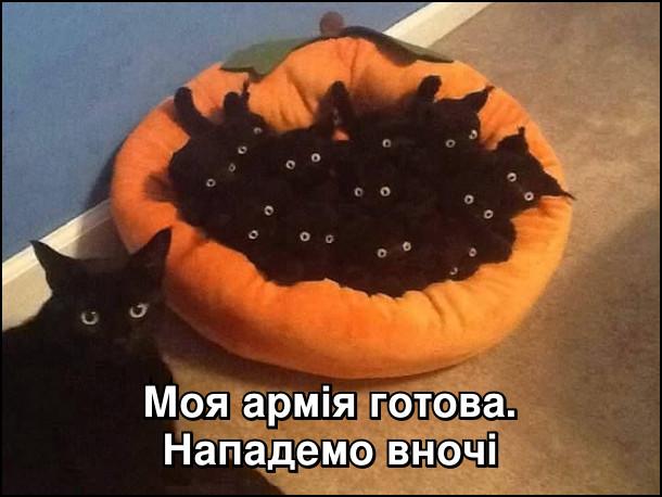 Коте A_11910