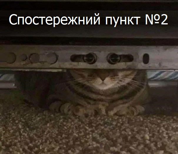 Коте A_119_10