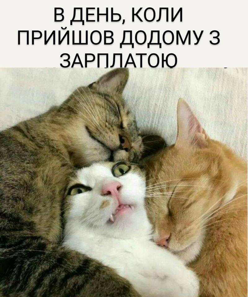Коте A_119_11