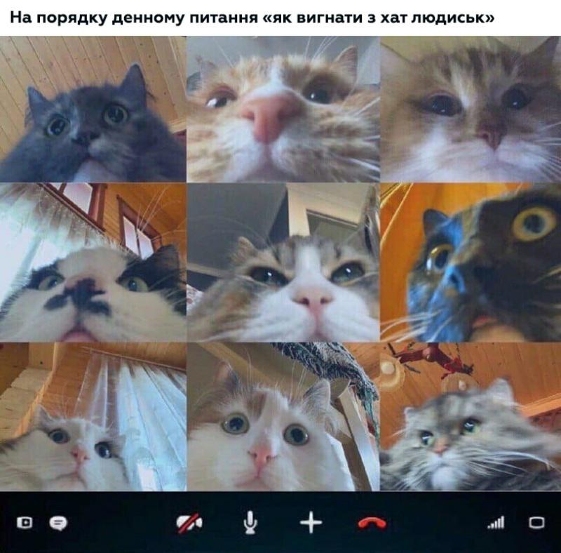 Коте A_1210