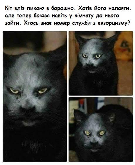 Коте A_12110