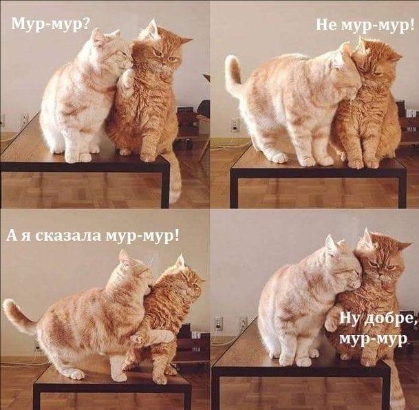 Коте A_12210