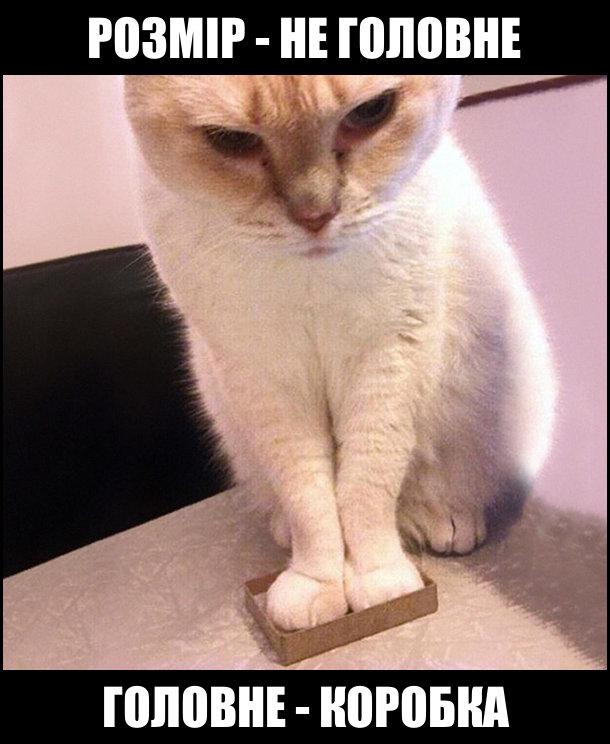 Коте A_12410