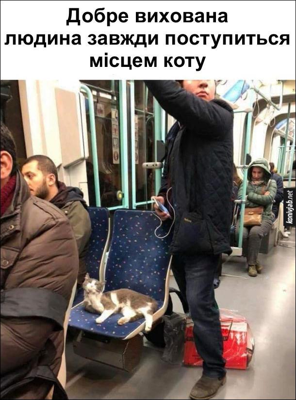 Коте A_12610
