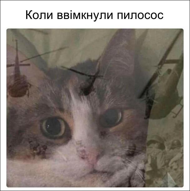Коте A_12710