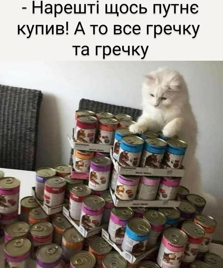 Коте A_1510