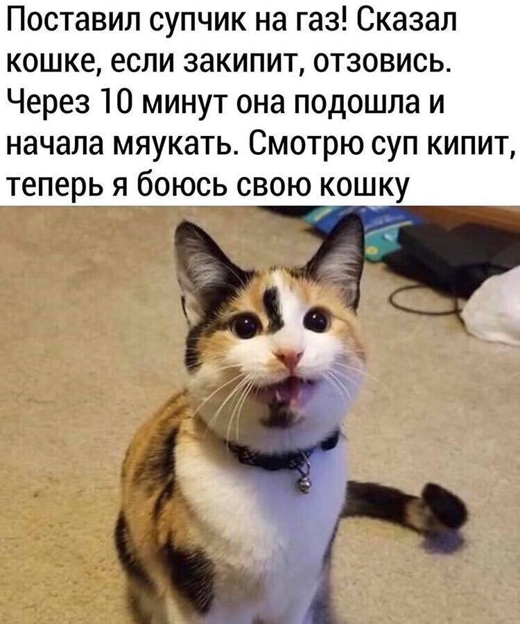 Коте A_1610