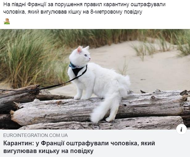 Коте A_1710