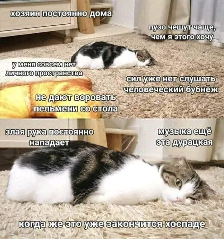 Коте - Сторінка 2 A_1810