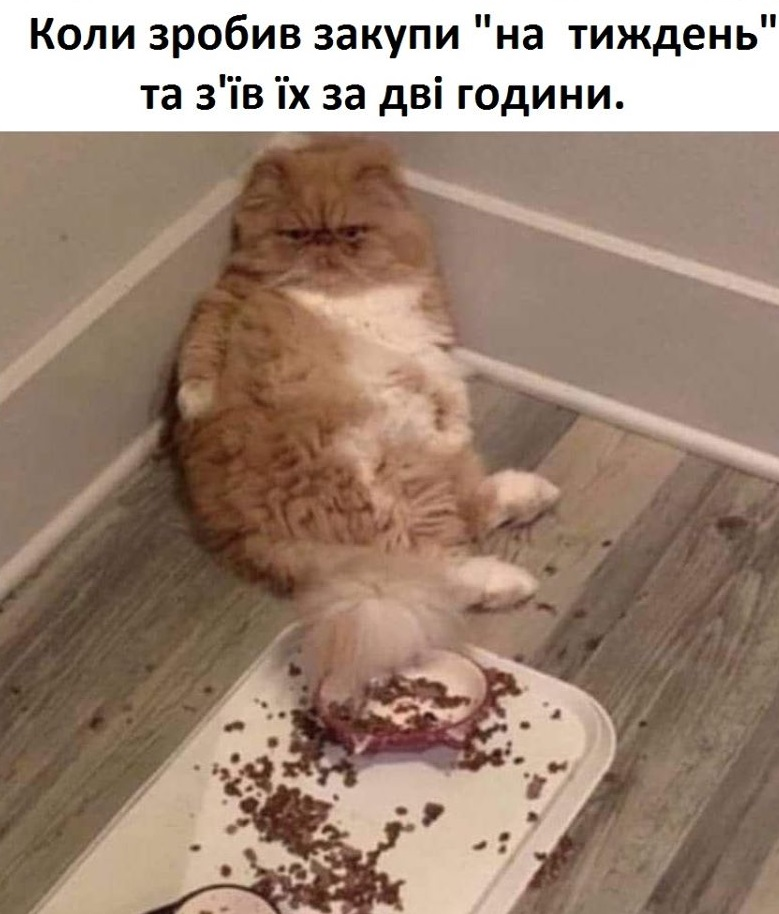 Коте - Сторінка 2 A_2110