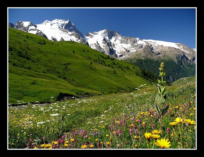 Lacs alpins début juillet P1400310