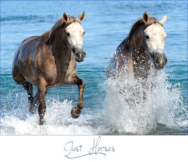 • Just Horses •