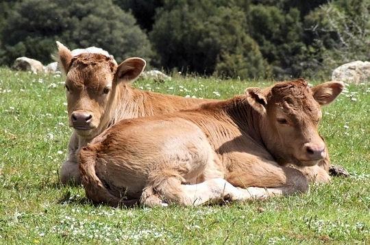 Les bébés de la ferme 4361510