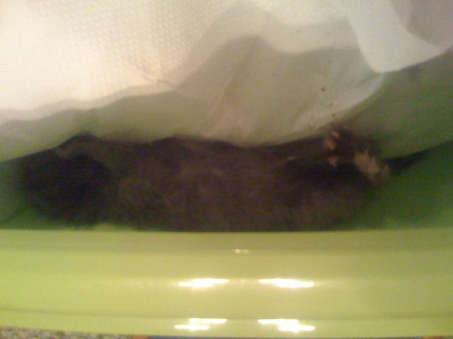 SOS - Νεογέννητα γατάκια!!! Img_0315