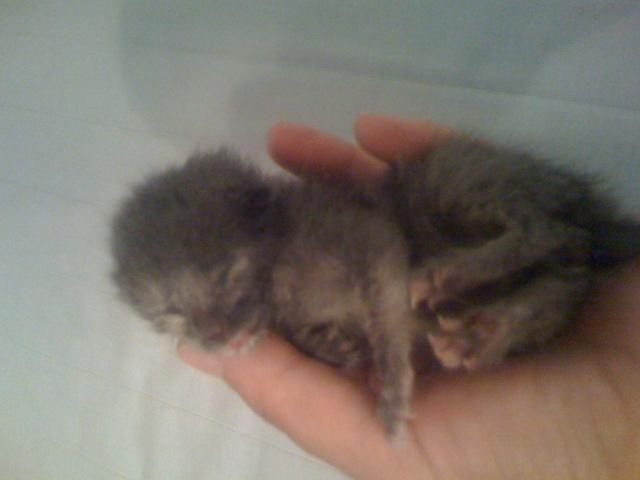 SOS - Νεογέννητα γατάκια!!! Img_0316