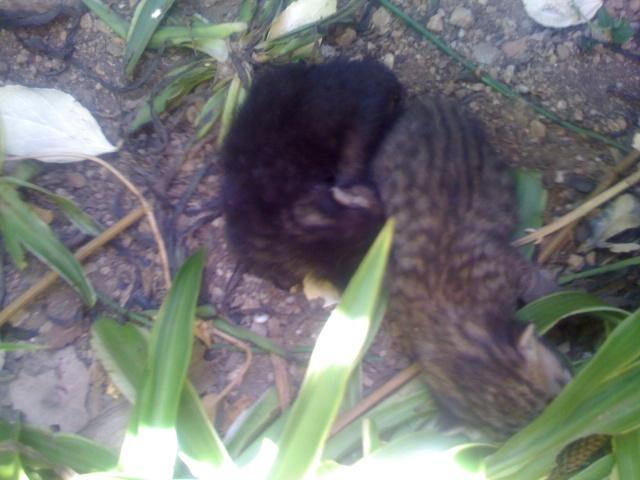 Νεογέννητα γατάκια Vol.2 - Σελίδα 2 Img_0327