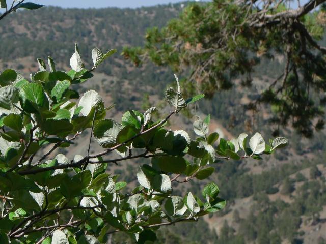 Les montagnes du Troodos (Chypre). P1010912