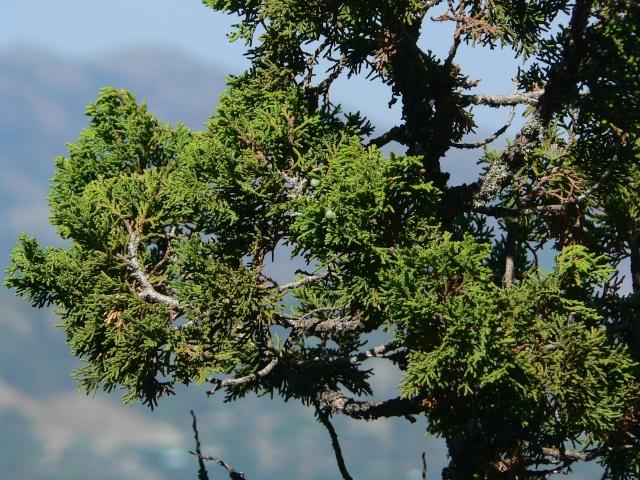 Les montagnes du Troodos (Chypre). P1010913
