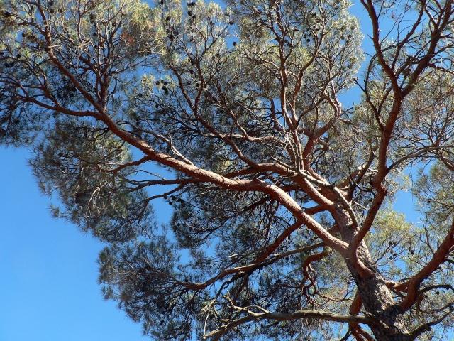 Les montagnes du Troodos (Chypre). P1010917