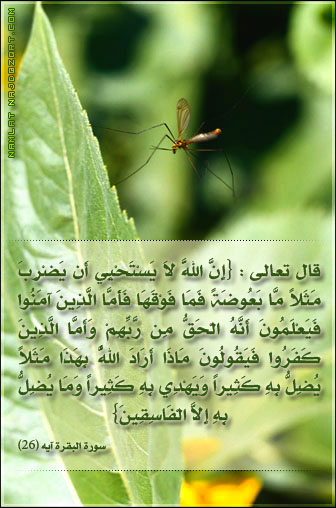 soubhanallah A10
