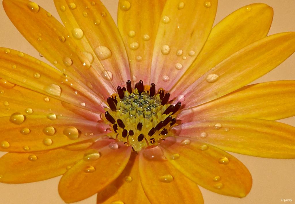 Fleur sur balcon Fleur_11