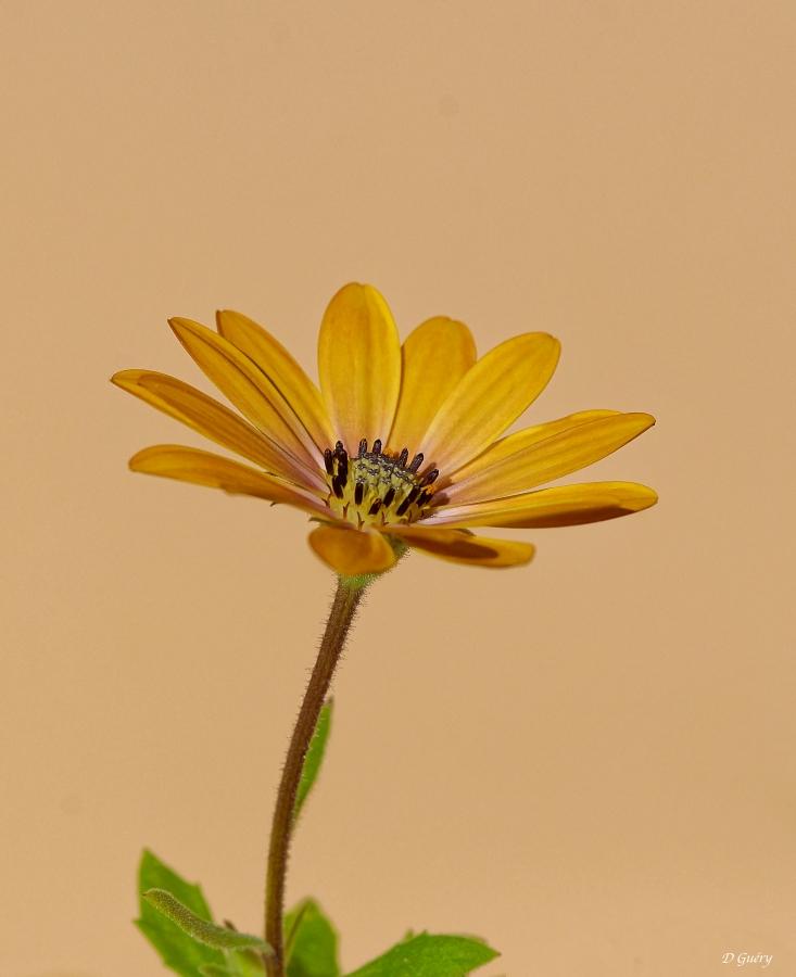 Fleur sur balcon Fleur_12