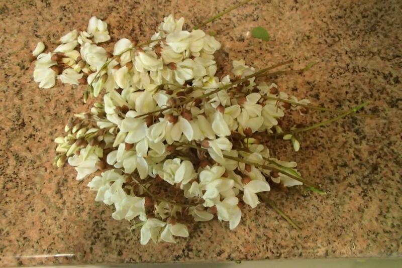 Il meurt intoxiqué après avoir confondu deux plantes cueillies en forêt P5070110