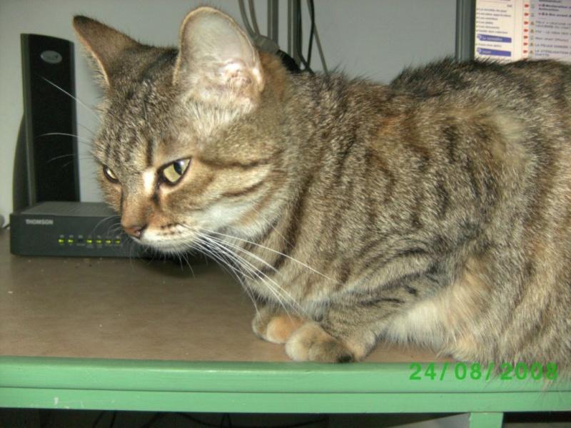 Notre peau de chat Bild2317