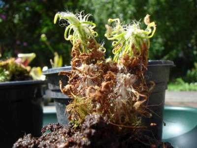 Mes tite plantes Dsc03110
