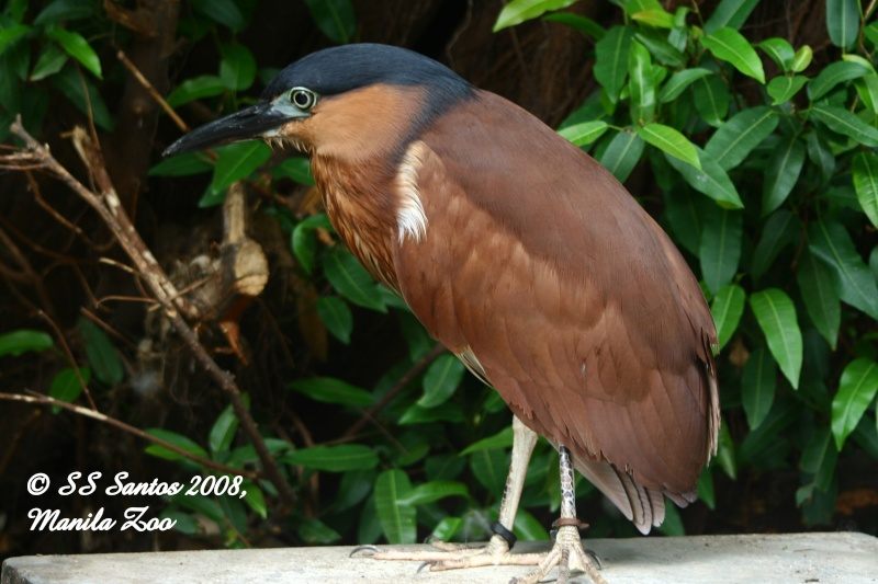 Wild Birds Manila10
