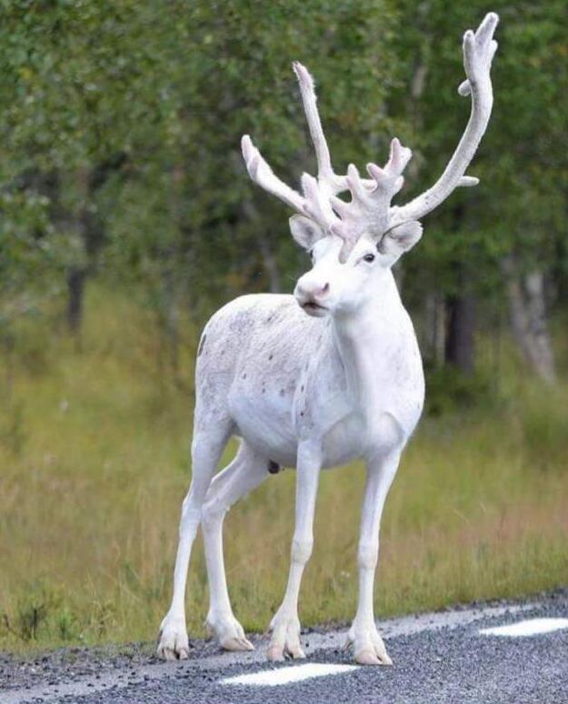 Foto di animali meravigliose - Pagina 5 106-2611
