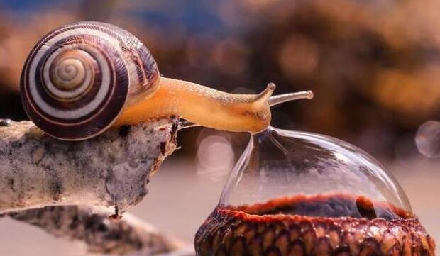 Foto di animali meravigliose 12-29110