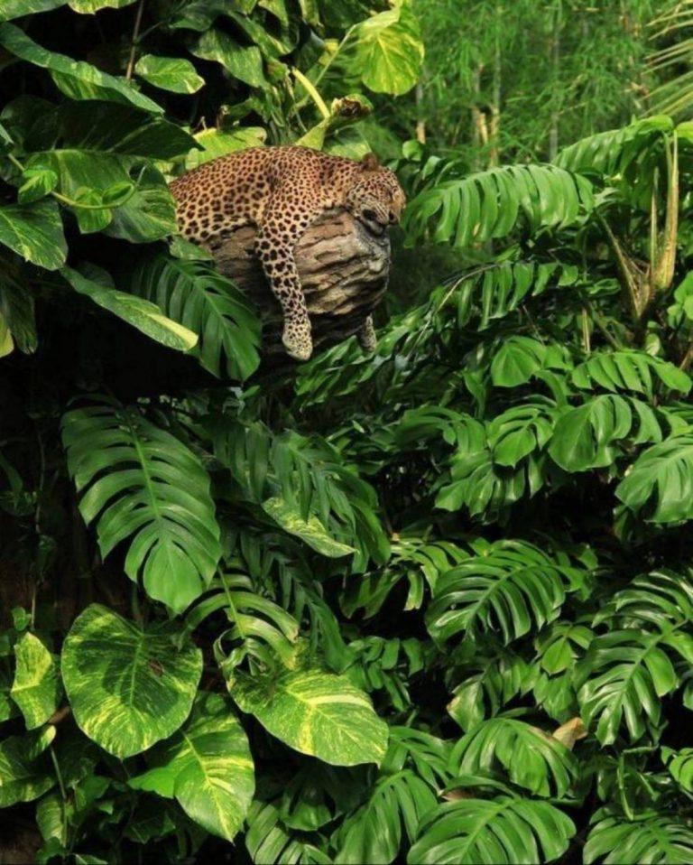 Foto di animali meravigliose - Pagina 8 13-15010