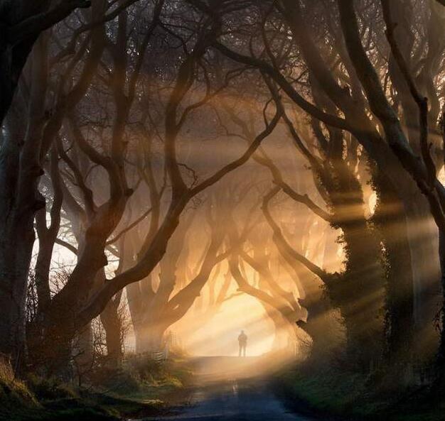 Quella strada nel bosco 14-26710
