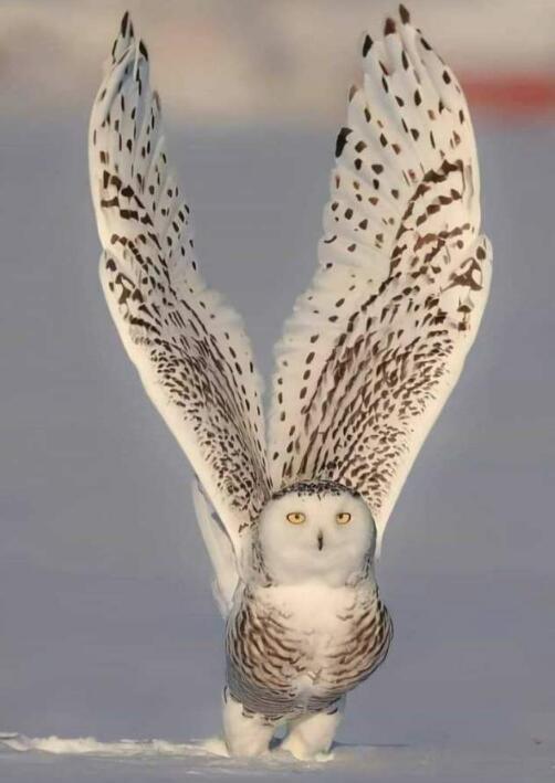 Foto di animali meravigliose 16-12911
