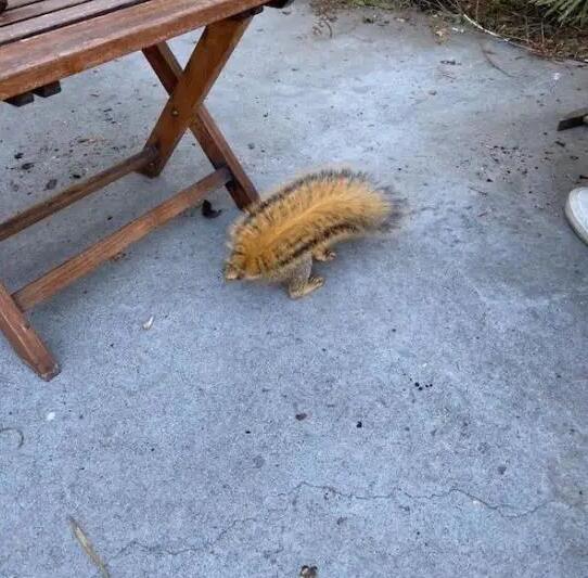 Gli scoiattoli non mangiano solo noccioline 18-12310