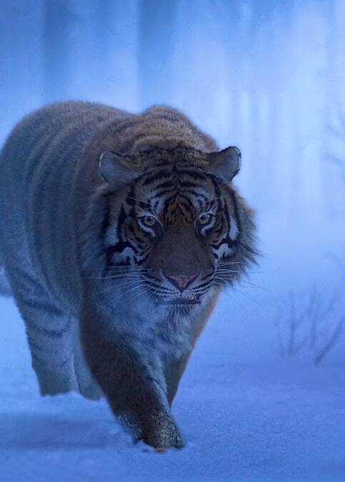 Foto di animali meravigliose - Pagina 4 20200410