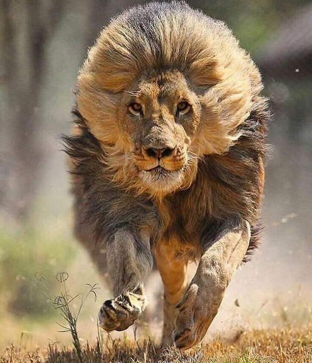 Foto di animali meravigliose 21-16510
