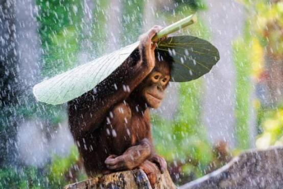 Foto di animali meravigliose 21-18110