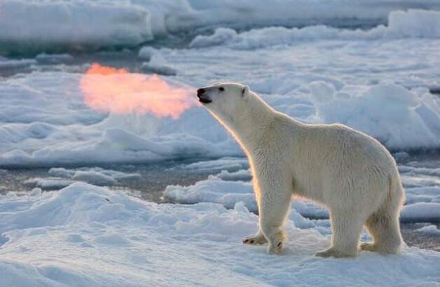 Foto di animali meravigliose 25-12410