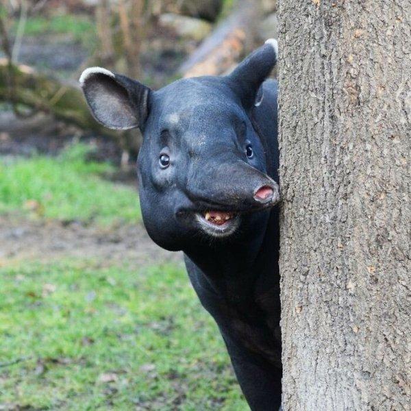 Foto di animali meravigliose - Pagina 9 250dc510